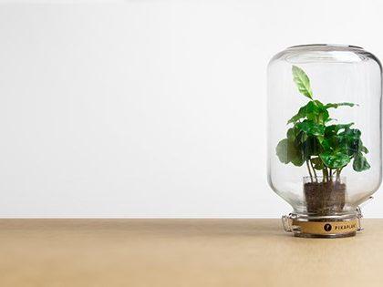 Pikaplant: le piante che non hanno bisogno di cure