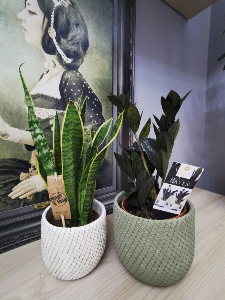 arredare casa con le piante arscity