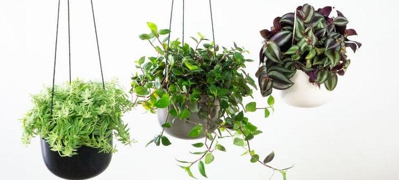 Arredare casa con le piante: 3 buoni motivi