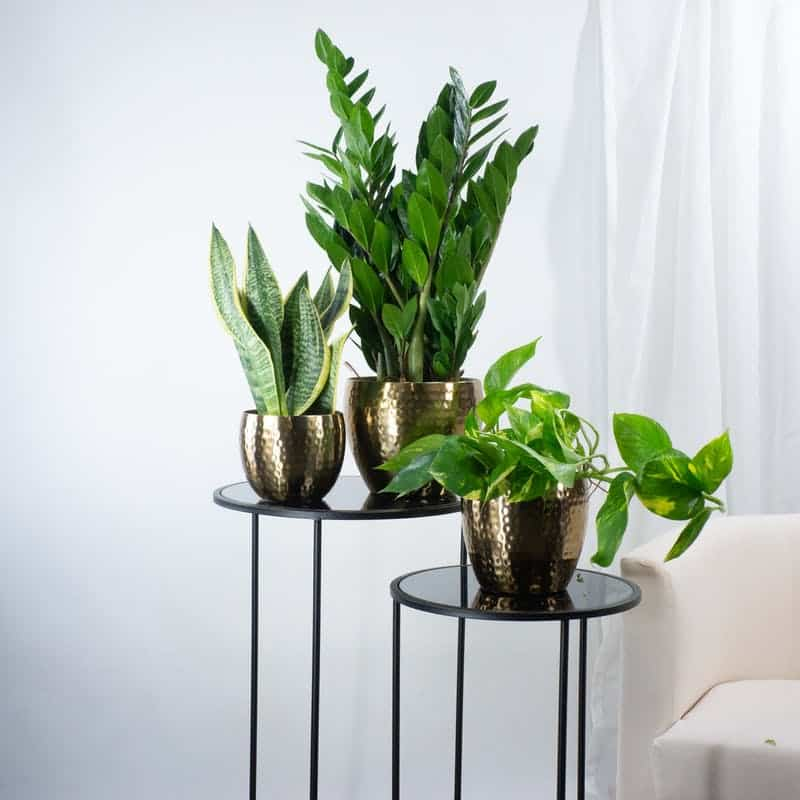 arredare casa con le piante